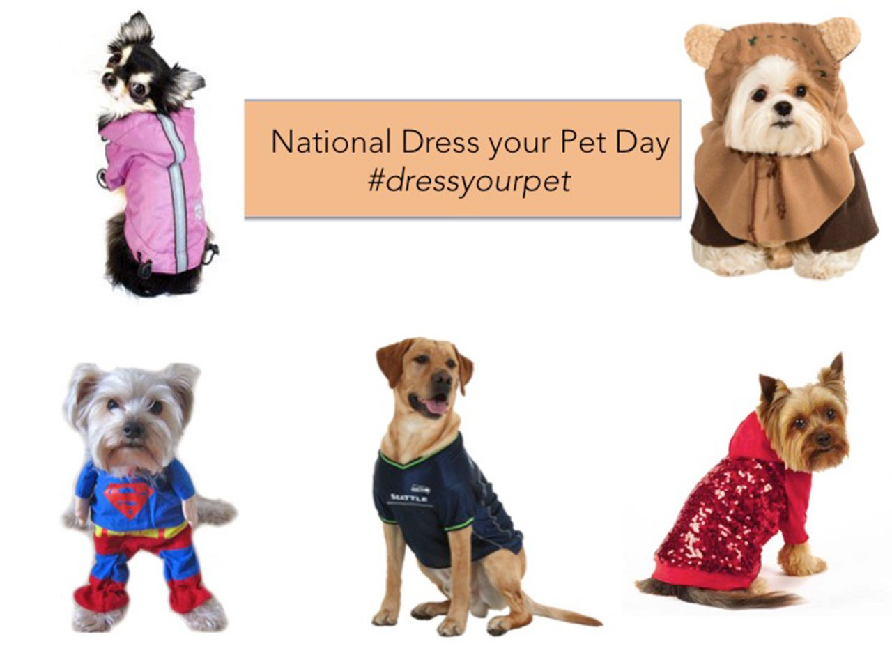 National Dress Your Pet Day