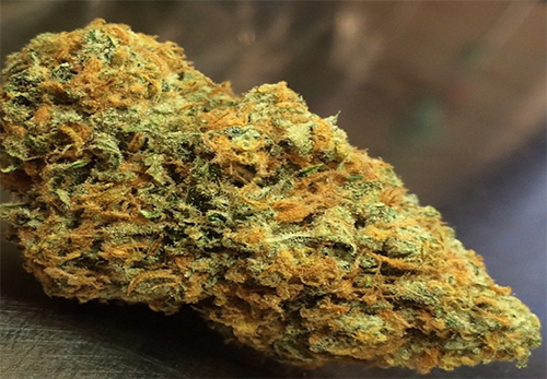 Orange Skunk Cannabis
