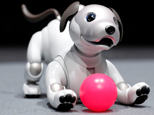 sony aibo dog robot