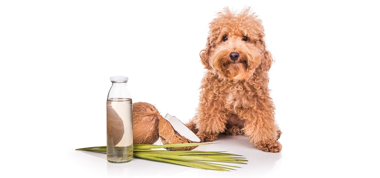 health-alternatives-dogs
