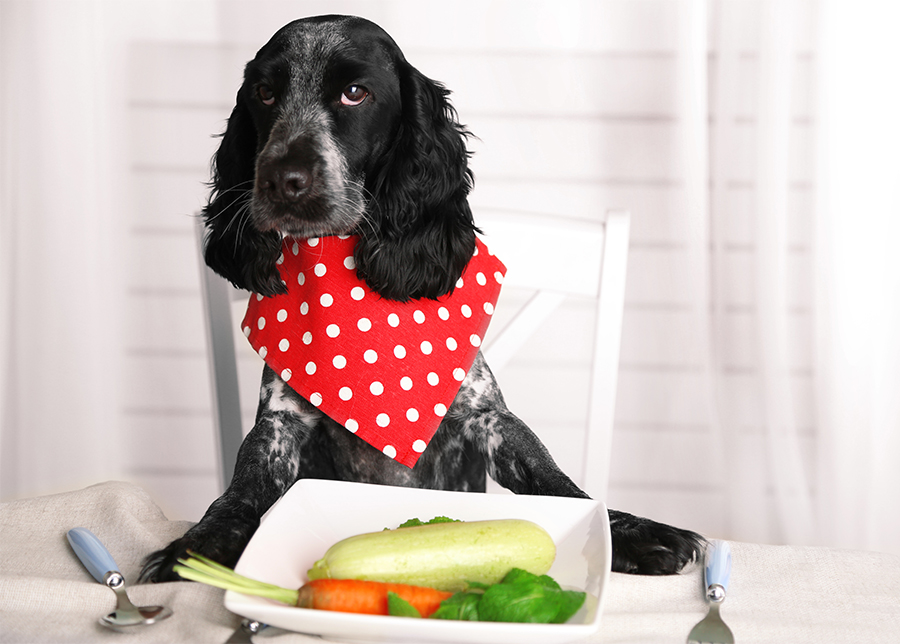 Can Dogs Eat Boiled Celery
