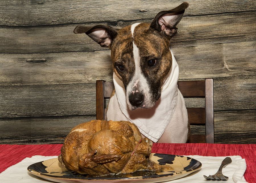 dogs-eating-turkey